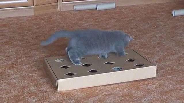 Игрушки для кошек и котят своими руками
