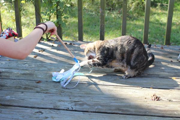Игрушка для кошек из аппроксимированных материалов