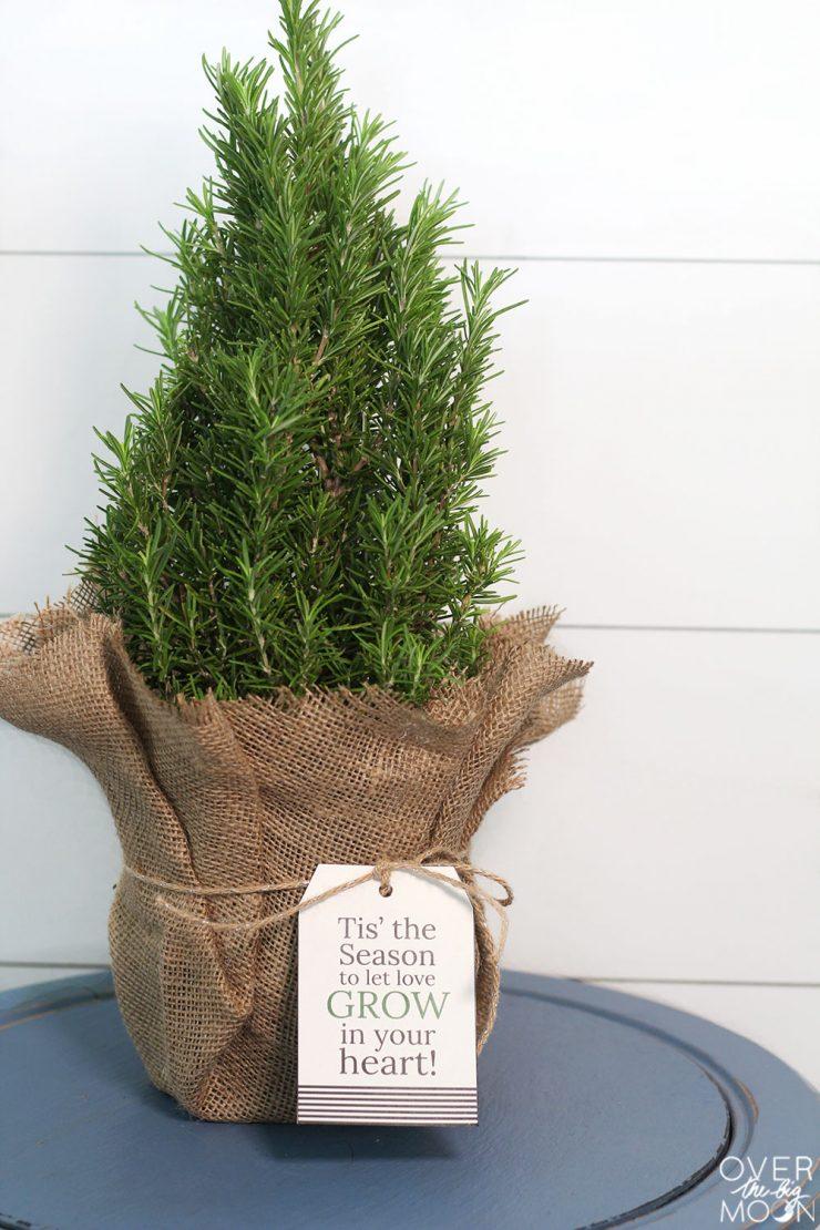 """Ищете праздничный подарок для ваших соседей, коллег или друзей? Эти мини-рождественские елки - прекрасный подарок! """"Width ="""" 740 """"height ="""" 1110 """"/> <span id="""